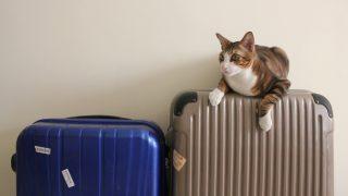 スーツケースのソフトとハードを比較 メリット・デメリットは?