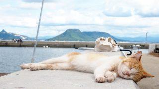 猫の留守番に暑さ対策?夏バテを避けるためのおススメの方法をご紹介