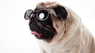 運転中のサングラスは違法なの?おすすめは偏向レンズ?