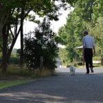 犬をノーリードで散歩させるのは事故やトラブルのもと ドッグランや訓練所の活用を!