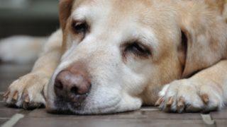 犬だって夏バテ 嘔吐や食欲がなかったら注意!症状とごはんのあげ方をチェック