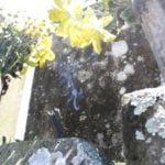 お墓の掃除セットと方法知ってる?雑草対策に塩は使ってはダメなの?