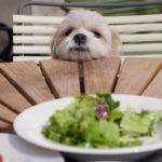 那須高原で犬と食事や宿泊ができるコテージやホテルをご紹介