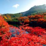 那須高原の紅葉おすすめドライブ 犬とのお出かけにも最高!