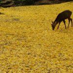奈良公園の紅葉見ごろはいつ?見どころスポットとおすすめコースは?