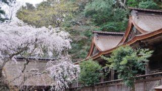 吉野山へのアクセス東京から行くには?電車とバスでの行き方をご紹介