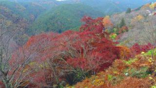 吉野山の紅葉見ごろ時期は?混雑する?駐車場は?見どころはどこ?