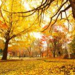横浜三渓園の紅葉見頃時期はいつ?ライトアップは?見どころや混雑情報をご紹介