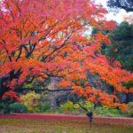 六義園の紅葉を混雑回避して鑑賞!見頃時期とライトアップの時間もご紹介