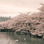 上野公園の桜 見ごろ時期と撮影にもおすすめな見どころスポットをご紹介