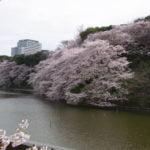 千鳥ヶ淵緑道に咲く桜の見頃時期とおすすめ撮影スポット&散策ルートをご紹介