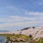 角館の桜見頃時期と駐車場の混雑情報やおすすめ撮影スポットご紹介