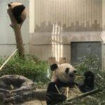 パンダのシャンシャンを観覧しに上野動物園へ!整理券はギリギリでした